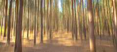 woods (markhortonphotography) Tags: intentionalcameramovement autumn surrey tree markhortonphotography woods surreyheath abstract blur thatmacroguy icm deepcut pinewoods verticalpanning