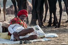 Herder of Pushkar (Shyjith Kannur Photography) Tags: pushkar camels herder camelherder rajasthan tribal