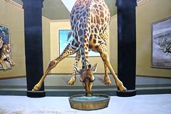 Art in Island (lukedrich_photography) Tags: philipines الفلبين 菲律宾 pilipinas फिलीपींस フィリピン 필리핀 филиппины republikangpilipinas republicofthephilippines asia southeast southeastasia pacific island canon t6i canont6i history culture manila luzon artinisland art 3d interactive quezon city museum illusion painting cubao animal giraffe water bucket tiger bowel