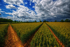Shropshire Summer 2016 (runman555) Tags: summer hdr crop clouds blue green line countryside england uk