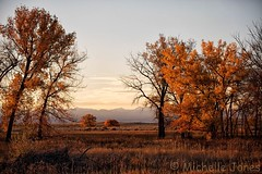 October 22, 2016 - A pretty fall scene at the Rocky Mountain Arsenal. (Michelle Jones)