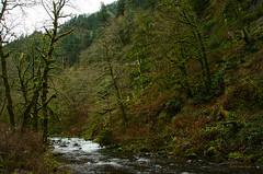 Tanner Creek (Xipitipix) Tags: wahclellafalls columbiarivergorge pacificnorthwest oregon november gorge tannercreek water moss