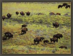 The Herd (karith) Tags: buffalo bison herd southdakota custerstatepark photoshopped openrange wherethebuffaloroam karith