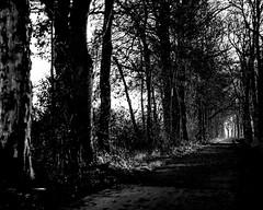 (Nico_1962) Tags: leica m240 summicron herfst autumn fall nederland blackandwhite zwartwit monochrome rangefinder leicam bw manualfocus primelens 50mm vintagelens thenetherlands