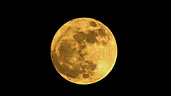 DSCN0487 Moon of Nov. 14, 2016 (tsuping.liu) Tags: nature natureselegantshots naturesfinest moon fullmoon night
