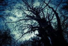 Stranger Things (Katrina Wright) Tags: dsc3986 tree branches autumn fall scary spooky haunted forest twilight dusk strange strangerthings