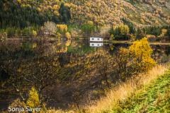 Spiegelungen (SonjaS.) Tags: lofoten norwegen spiegelungen herbst autumn