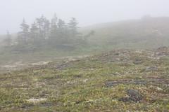 The Barrens (Loops666) Tags: rocks trees moss shrubbery fog terrain geography newfoundland