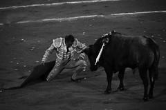 Cara a cara (valeriaatorres) Tags: zotoluco toros torero ruedo plaza de monterrey mxico arte cultura bullfighting bullfight banderillas capote