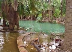 Overflowing (shaneblackfnq) Tags: rain flooding flood overflowing shaneblack mataranka nt northern territory australia tropics tropical top end springs oasis thermal pools
