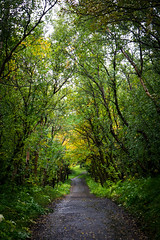 Trees are surprisingly rare in Iceland (kzoop) Tags: iceland travel vacation europe lake myvatn nature hofdi tree trees forest woods hike hiking