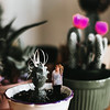 Poked (tryniti almquist) Tags: girl miniature conceptual manipulation photoshop portrait pretty model cactus cacti succulent garden plants indoor natural pretend photography gorgeous sunlight lady plant flower