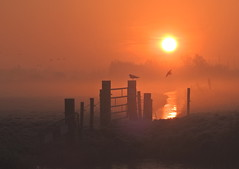 cold sunrise (bugman11) Tags: sunrise sun autumn nikon nature nederland bird birds animal animals fauna fence thenetherlands thegalaxy