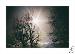 holding on (Howard Sandford) Tags: bare winter bright sun sunlight lensflare flare tree