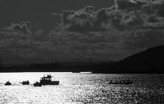 newburgh rowing club regatta 2015-8150293 (E.........'s Diary) Tags: club august rowing regatta eddie newburgh 2015 rossolympusomdem5markiiscotlandaugust2015newburghfife rossolympusomdem5markiiscotlandaugust2015newbu