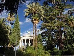 Parc Chambrun - Nice(06) 3de5 (3D-Stretch) Tags: park lebanon tree french nice riviera francaise cte paca cedar cote 06 arbre parc azur liban dazur alpesmaritimes franaise cdre cedrus provencealpesctedazur libani chambrun