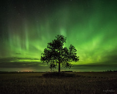The Guardian (WherezJeff) Tags: ca summer portrait canada tree green field calm alberta solo aurora serene legal northernlights distagon1528zf