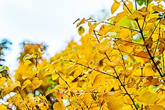 Unser Garten im Oktober-10 (joerg.stappen) Tags: pflanze unsergarten