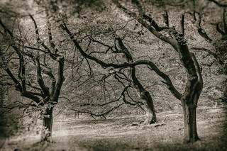 Emsland - Herbst_IMG_9161