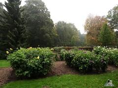 Eisbr Fite im Zoo Rostock 17.10.215 Teil 2  0190 (Fruehlingsstern) Tags: dahlien