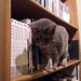 Anya kitty checking out her namesake books