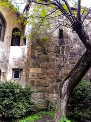 The twisted tree (Raoul Pop) Tags: old windows plants tree architecture garden season nokia stonework medieval romania ro bushes shrubs transilvania clujnapoca n95 nokian95