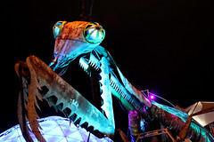 IMG_4697e (chiaracphotography) Tags: old las vegas gambling mantis lights lasvegas flamingo nevada fremont nv fremontstreet lasvegasnv 4queens oldvegas elcortezhotel fremonst chiaracphotography