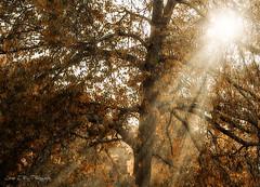 Autumn sun (José Luis Pérez Navarro) Tags: tree arbol sol sun otoño autumn nikon d60 joseluisperez blacky2007 nature natura naturaleza rayosdeluz contraluz outono árvore arbre automne 秋 backlighting lightbeams light hojas leaves foliage sunset atardecer world100f specialtouch infinitexposure