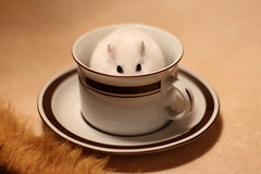 Hamster in a cup (Attolrahc) Tags: pet white cup animal canon 50mm coffeecup f14 indoor depthoffield hamster dwarfhamster petphotography canonef50mmf14 60d canoneos60d