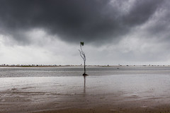 Alone tree (Naveen Gowtham) Tags: life street sky people india plant man tree love beach nature colors marina canon t photography is alone y o outdoor weekend g united ngc streetphotography efs1855mm streetlife h national ii r monsoon p lonely ng marinabeach chennai incredible geographic tamilnadu bessie nationalgeographic cwc naveen clickers naveens gowtham f3556 alonetree canon600d gnaveen naveensphotography naveengowtham naveeng naveengowthamphotography