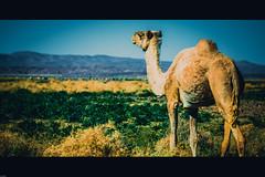 _95A0569 (yacinoo78) Tags: canon algerie hogar tassili borj djanet tassilinajjer ihrir elhawas 5dm3