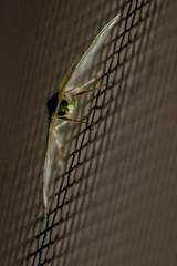 Synchlora aerata (265/366) (severalsnakes) Tags: missouri saraspaedy sedalia bug insect moth raynox150 synchloraaerata wavylinedemeraldmoth