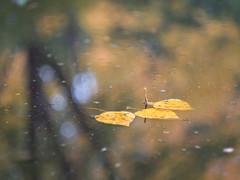 Fall impression (A_Peach) Tags: gx8 helios park autumn leaf leaves reflection fall autumncolours panasoniclumixgx8 helios442 vintagelens bokeh