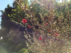 Jardines de Mxico <3 (jesus saint) Tags: calor tarde da cielo brillodesol sunshine shine luz rayo rayosdesol sol hojas planta fiucsa rosa arbusto paisaje verde seco ramitas ramas rbol flores tree nature naturaleza natura