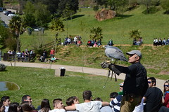 aves de cabarceno (gaby-photo) Tags: cabarceno cantabria milano buitre guila real nikon nuaturaleza nature bird pajaro carroero