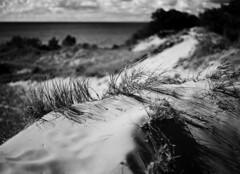 Shifting sands (pabs35) Tags: grandmerestatepark michigan lakemichigan sand dune lake film believeinfilm mediumformat 120 ilford fp4 fp4plus ilfordfp4plus mamiya m645 1000s mamiyam6451000s redfilter clouds water grass