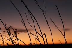 Puesta de sol (NerePlum) Tags: atardecer naranja sol naturaleza palos ramas