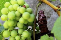 Wookiee Vine (DocChewbacca) Tags: wookiee chewbacca vine vineyard fruit garden france raisin grappe starwars lego figurine minifig toyphotography