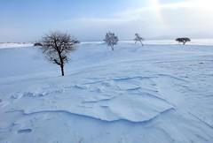_MG_7451 (c0466art) Tags: 2015 chinese inner mogolia trip travel  grass land hill winter season snow world sunrise trees ice beautiful landscape scenery light canon 1dx c0466art
