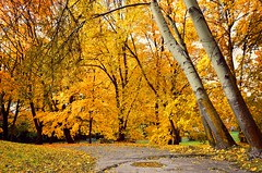 Park of Decjusz (joanna_l95) Tags: autumn fall park decjusz krakow cracow