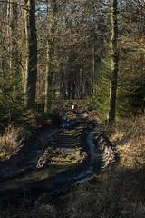 ckuchem-7095 (christine_kuchem) Tags: abholzung baum baumstmme bume einschlag fichten holzeinschlag holzwirtschaft wald waldwirtschaft