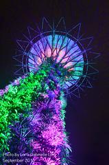 Super Grove Tree (lakaira_echoes) Tags: super groves singapore longexposurephotography longexposure lights color colorful manmade night nikon nikonphotography