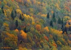30500416862_7326de2da5_o (photoAKM/Ainars Meiers) Tags: fall autumn latvia sigulda vidzeme autumngold