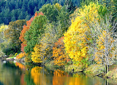 Autumn in the Columbia River Gorge (dmeeds) Tags: autumn trees yellow orange green river reflection
