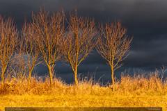Veern svtlo (jirka.zapalka) Tags: winter czech landscape clouds vizovice meadow village trees