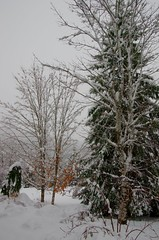 First Snow of Winter (kimshand) Tags: ns novascotia wentworthvalley wentworth snow snowing snowfall snowstorm december winter serene nature snowcovered