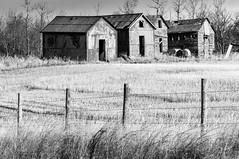 Old farm buildings (Richard McGuire) Tags: saskatchewan buildings farm fields rural ruraldecay mervinno499 canada ca