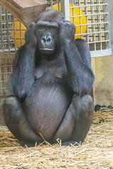 zoo heidelberg2 (micnie) Tags: heidelberg germany zoo tiere nikon d5200 vogel affe otter elefant gorilla schimpanse lwe waschbr schildkrte zebra straus papagei badenwrthenmberg
