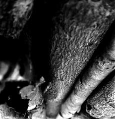 (record) (Dinasty_Oomae) Tags: bolsey  bolseyb2 b2  blackandwhite bw monochrome outdoor  chiba   funabashi  log