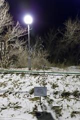 Paolo Nespoli (Granmuc) Tags: baikonur cosmonaut alley trees